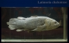 Neurocranial development of the coelacanth and the evolution of the sarcopterygian head